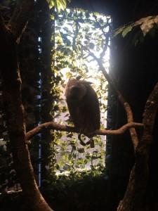 鎌倉 フクロウの森
